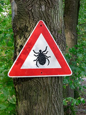 tick insect warning sign in forest